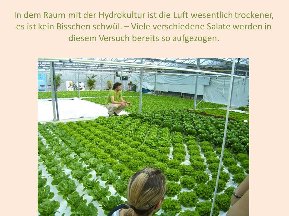 In dem Raum mit der Hydrokultur ist die Luft wesentlich trockener, es ist kein Bisschen schwül.