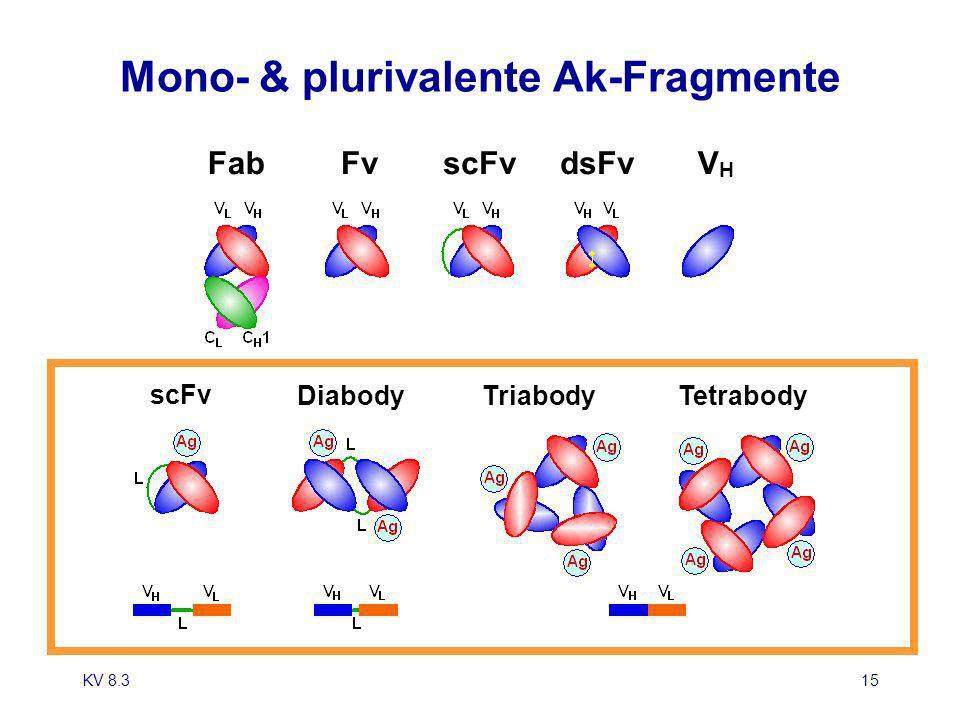 Mono- & plurivalente Ak-Fragmente