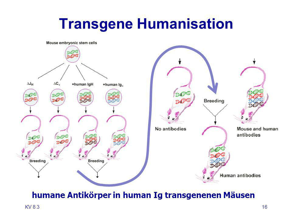 Transgene Humanisation