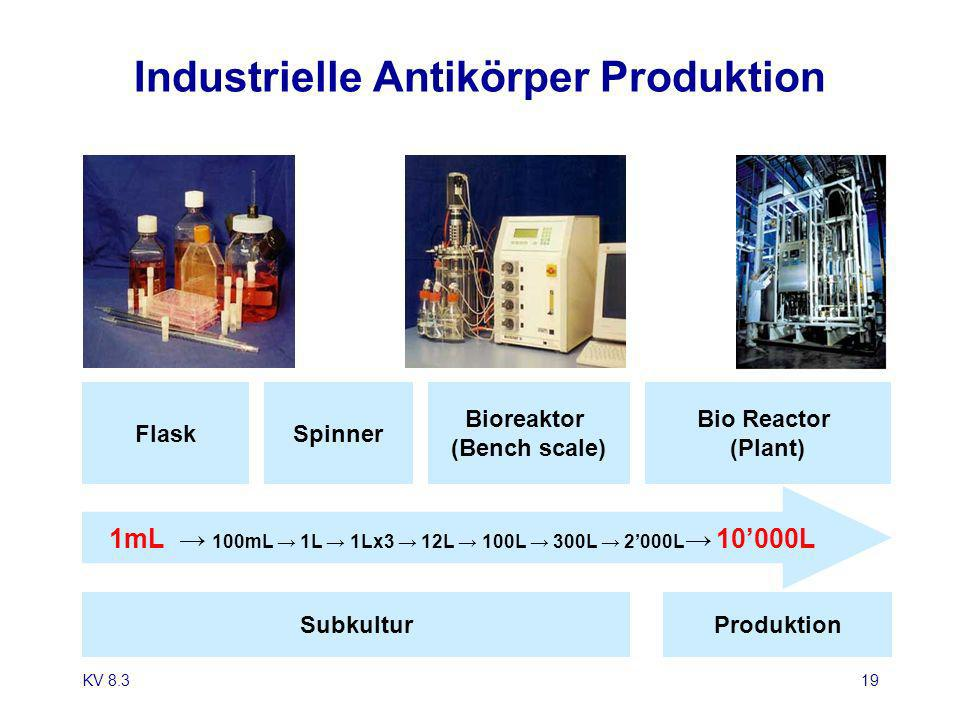 Industrielle Antikörper Produktion