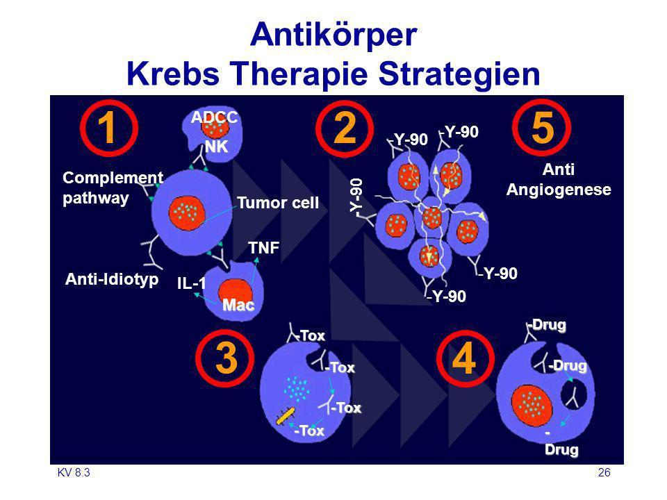 Antikörper Krebs Therapie Strategien