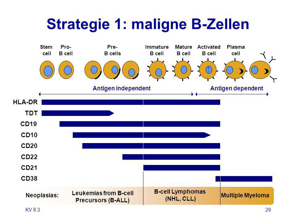 Strategie 1: maligne B-Zellen