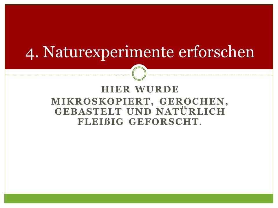 4. Naturexperimente erforschen