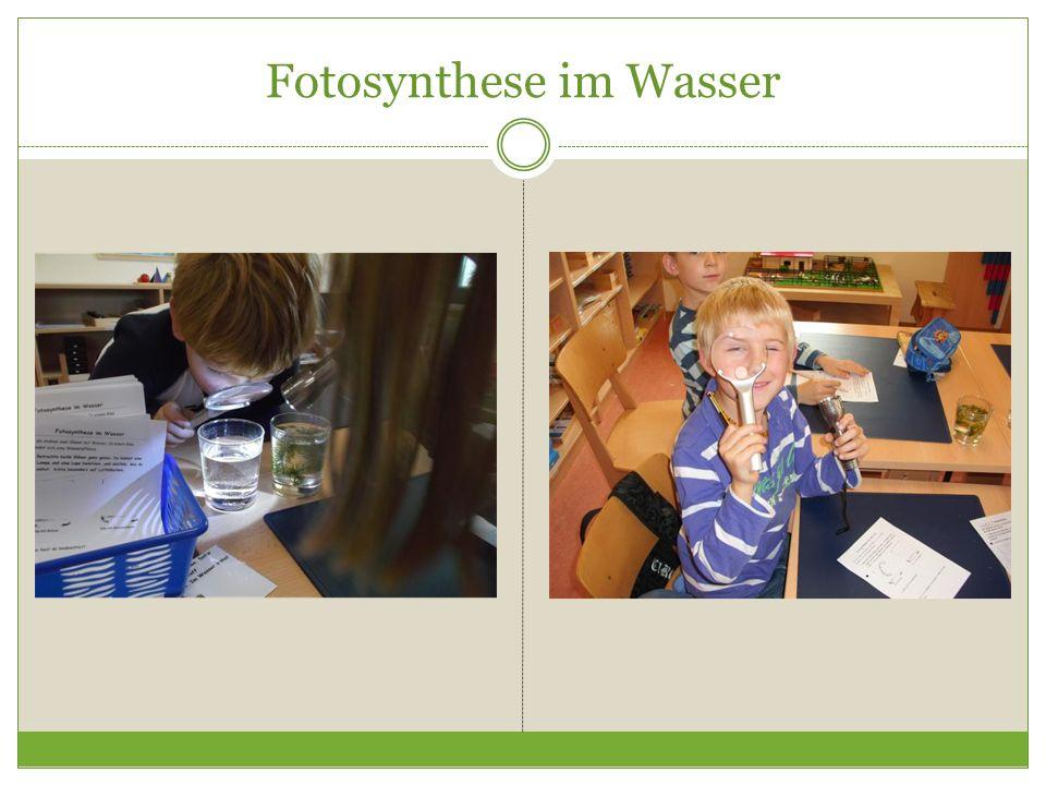 Fotosynthese im Wasser