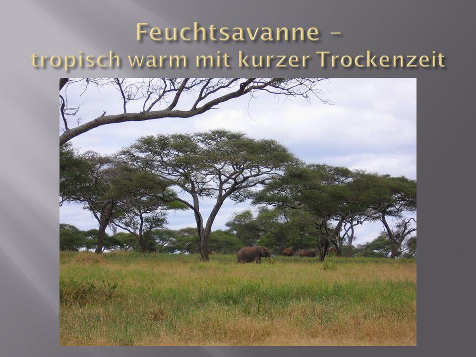 Feuchtsavanne – tropisch warm mit kurzer Trockenzeit