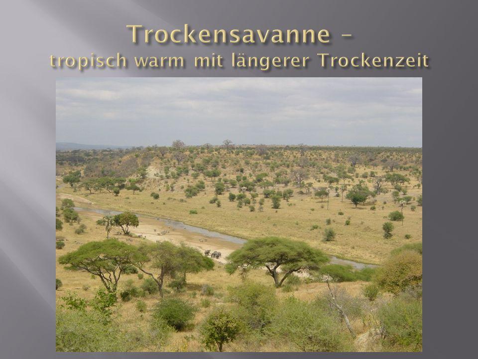 Trockensavanne – tropisch warm mit längerer Trockenzeit
