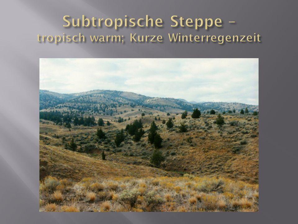Subtropische Steppe – tropisch warm; Kurze Winterregenzeit