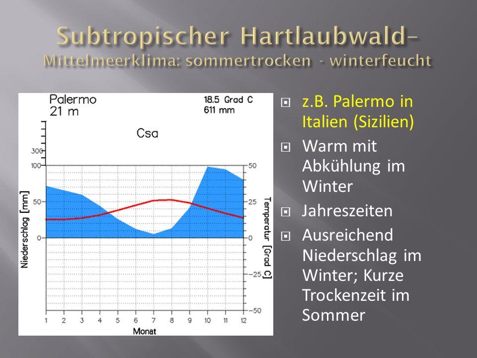 Subtropischer Hartlaubwald– Mittelmeerklima: sommertrocken - winterfeucht