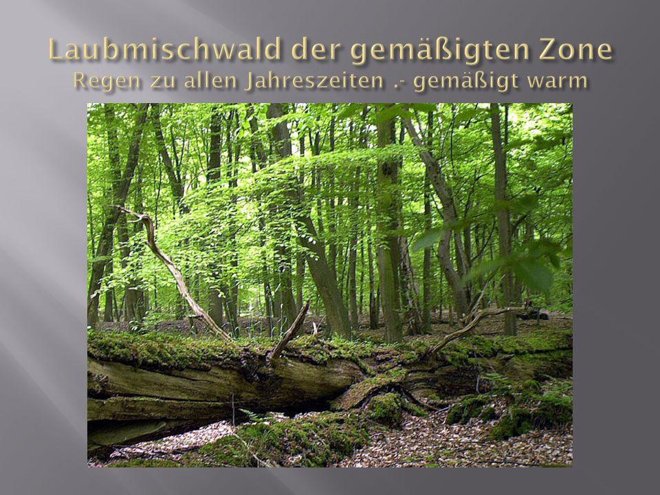 Laubmischwald der gemäßigten Zone Regen zu allen Jahreszeiten