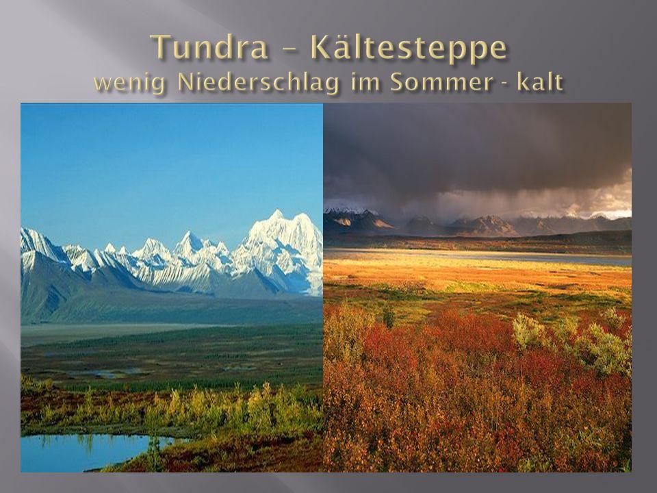 Tundra – Kältesteppe wenig Niederschlag im Sommer - kalt
