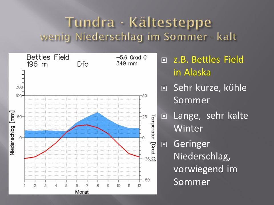 Tundra - Kältesteppe wenig Niederschlag im Sommer - kalt
