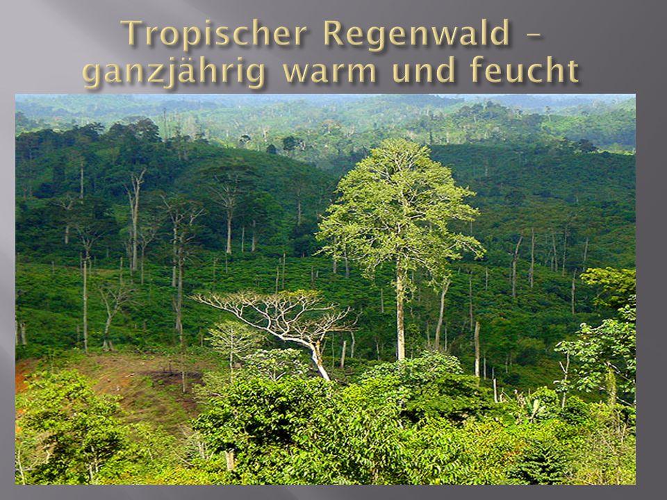 Tropischer Regenwald – ganzjährig warm und feucht