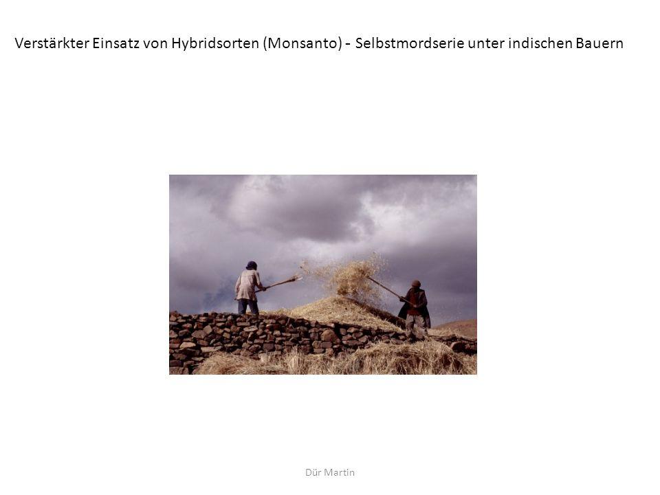 Verstärkter Einsatz von Hybridsorten (Monsanto) - Selbstmordserie unter indischen Bauern