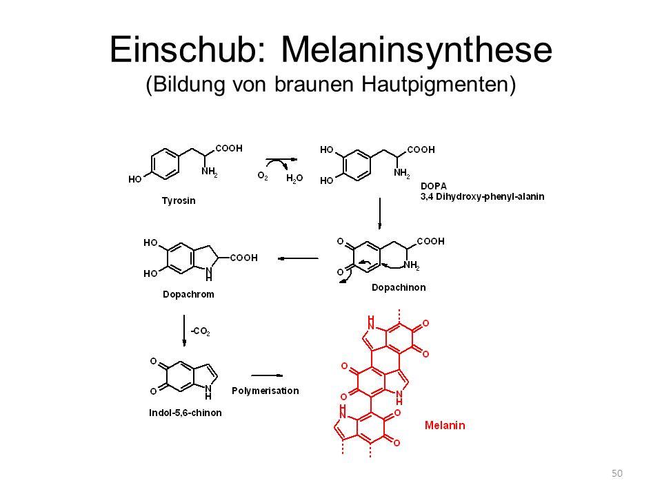 Einschub: Melaninsynthese (Bildung von braunen Hautpigmenten)