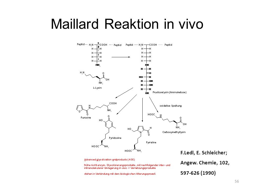 Maillard Reaktion in vivo