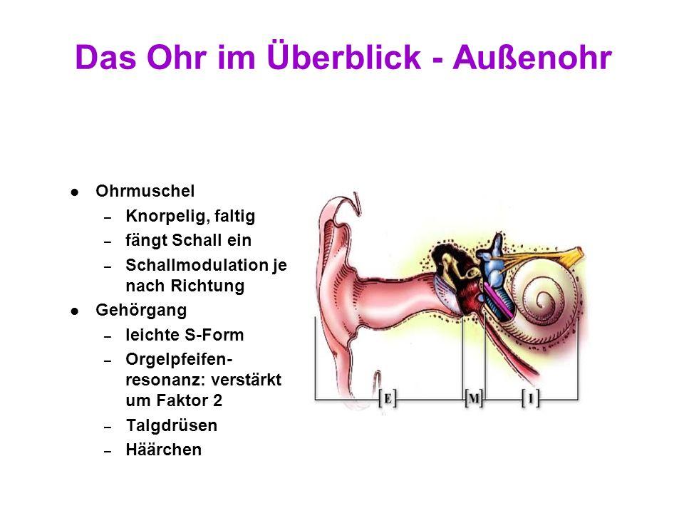 Das Ohr im Überblick - Außenohr