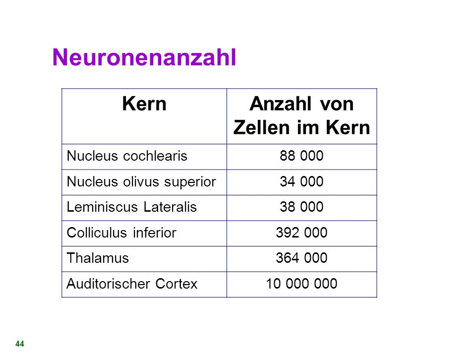 Neuronenanzahl Kern Anzahl von Zellen im Kern Nucleus cochlearis