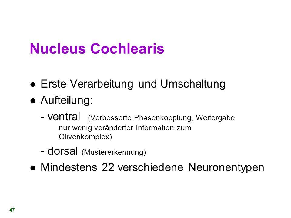 Nucleus Cochlearis Erste Verarbeitung und Umschaltung Aufteilung: