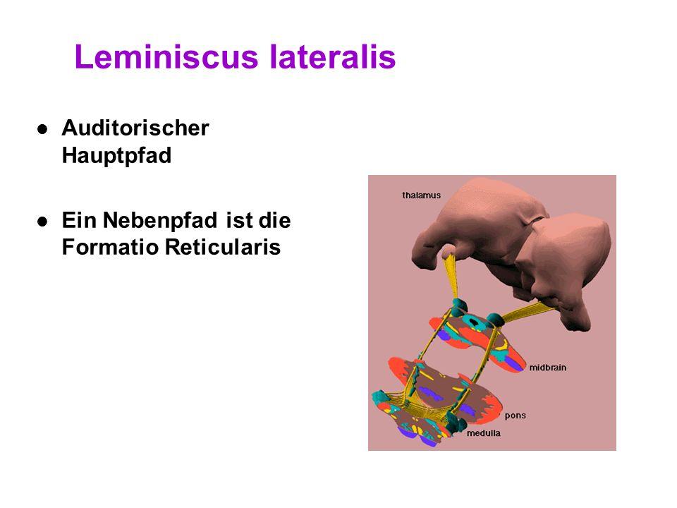 Leminiscus lateralis Auditorischer Hauptpfad