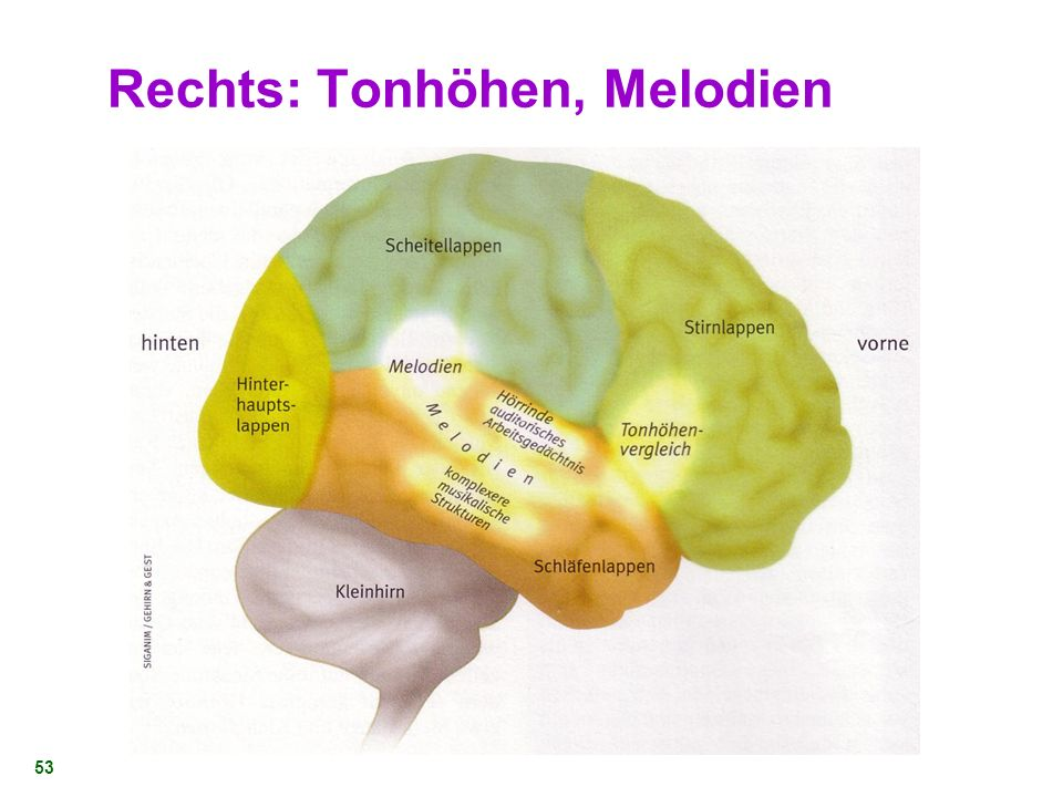 Rechts: Tonhöhen, Melodien