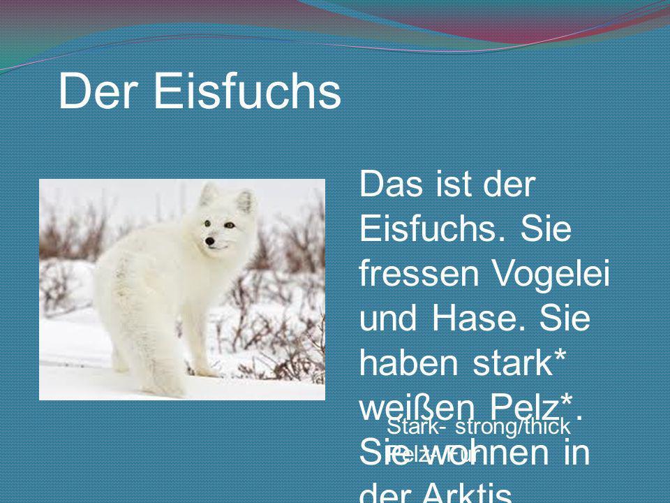 Der Eisfuchs Das ist der Eisfuchs. Sie fressen Vogelei und Hase. Sie haben stark* weißen Pelz*. Sie wohnen in der Arktis.