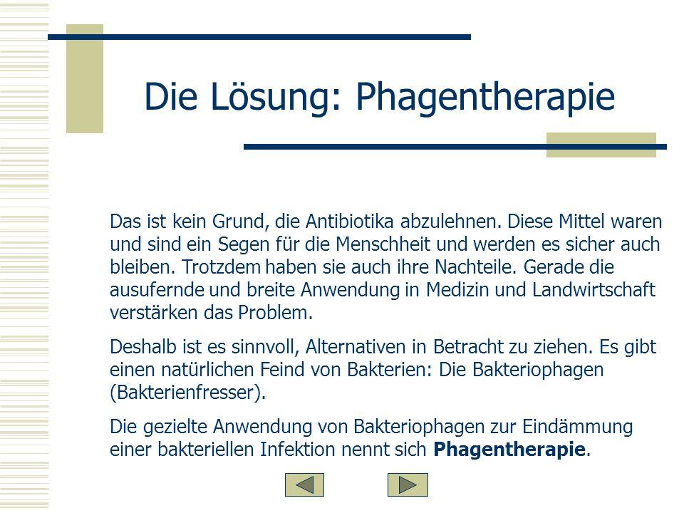 Die Lösung: Phagentherapie
