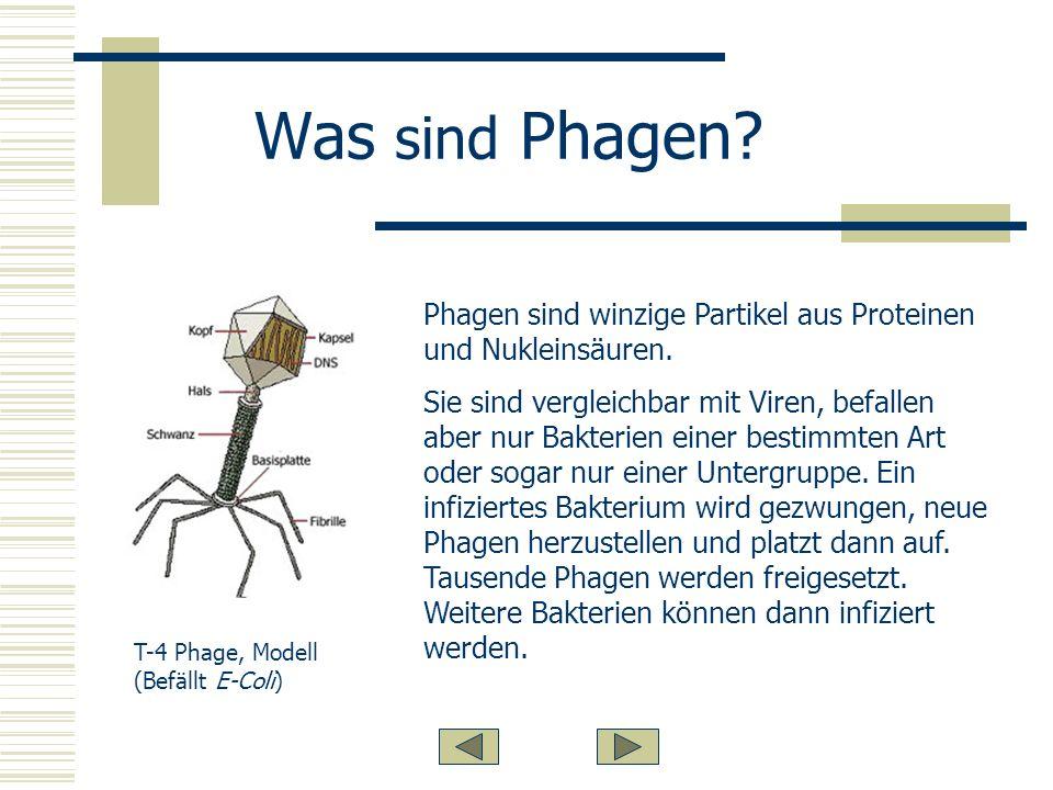 Was sind Phagen Phagen sind winzige Partikel aus Proteinen und Nukleinsäuren.