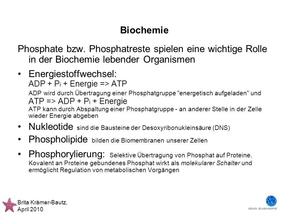 Nukleotide sind die Bausteine der Desoxyribonukleinsäure (DNS)