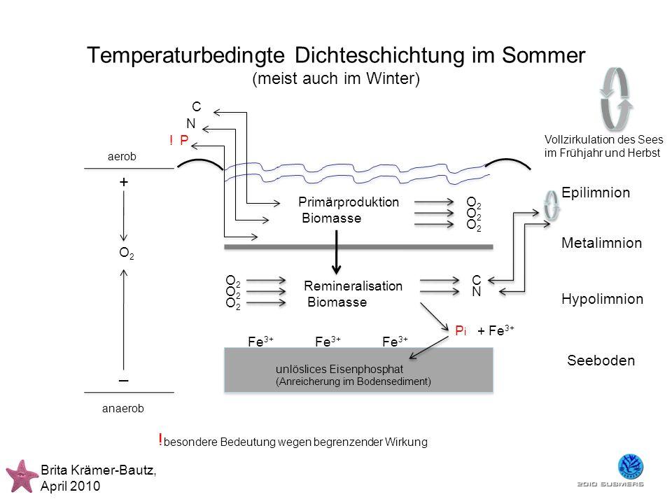 Temperaturbedingte Dichteschichtung im Sommer (meist auch im Winter)