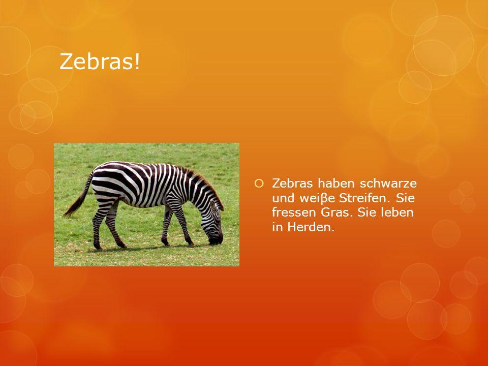 Zebras! Zebras haben schwarze und weiβe Streifen. Sie fressen Gras. Sie leben in Herden.