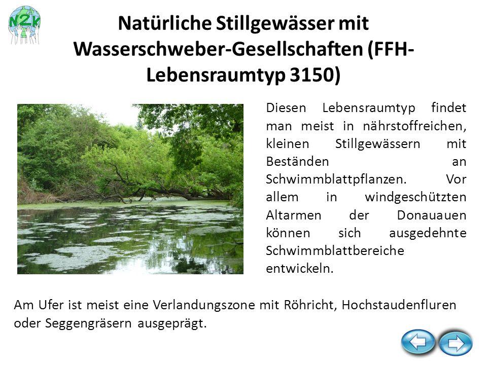 Natürliche Stillgewässer mit Wasserschweber-Gesellschaften (FFH-Lebensraumtyp 3150)
