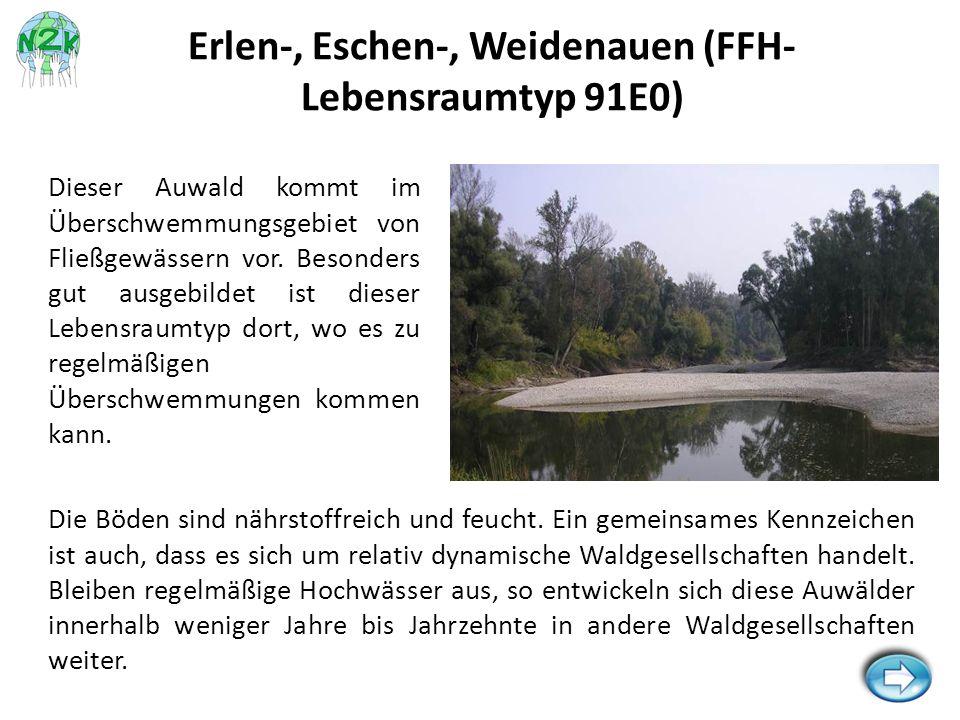 Erlen-, Eschen-, Weidenauen (FFH-Lebensraumtyp 91E0)