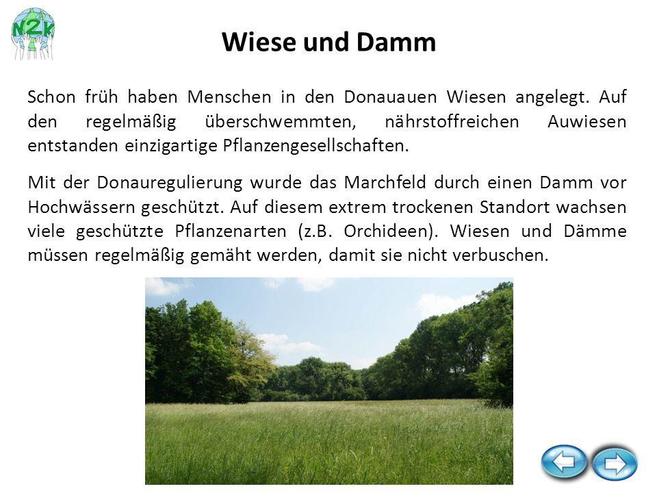 Wiese und Damm
