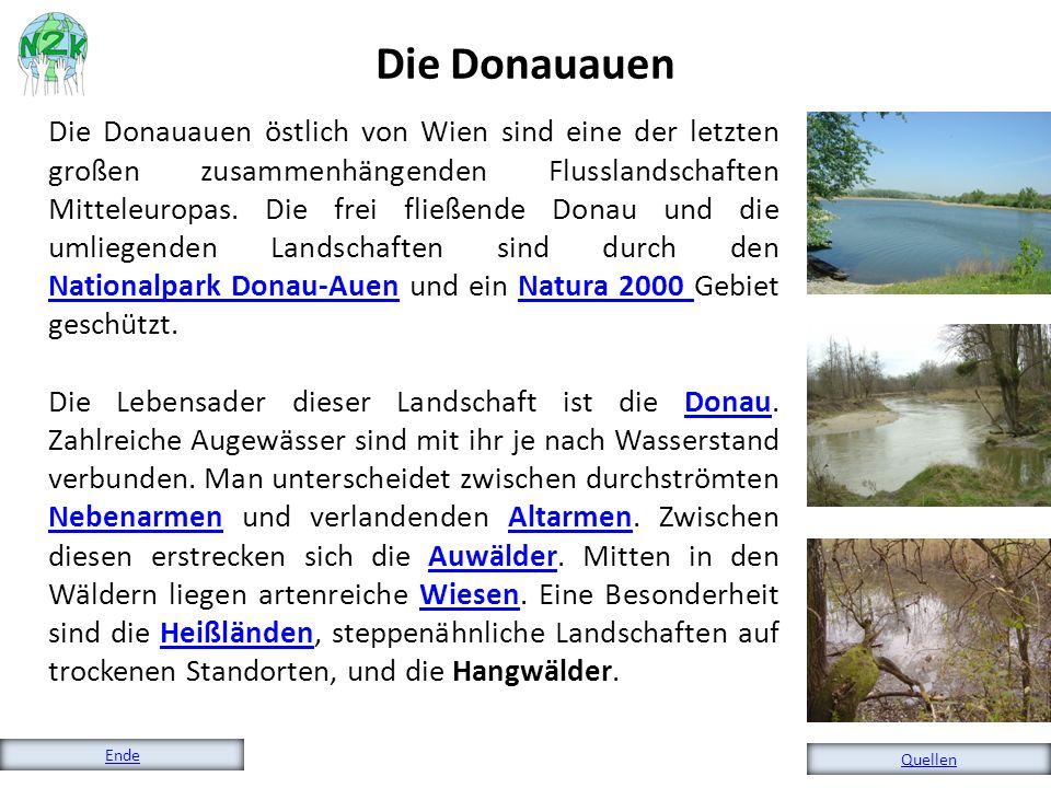 Die Donauauen