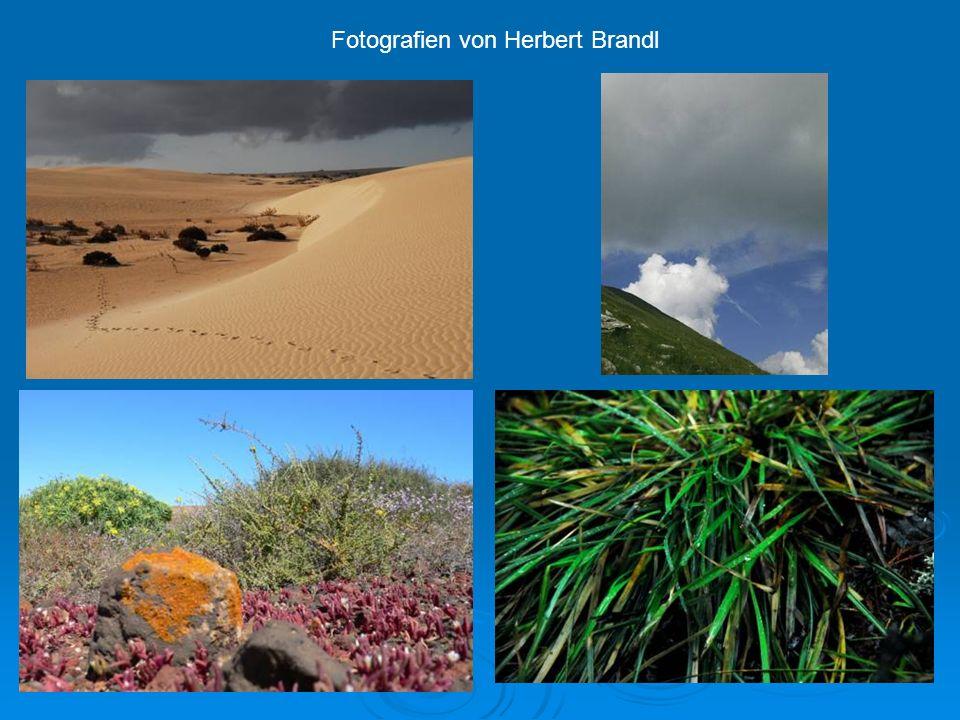 Fotografien von Herbert Brandl