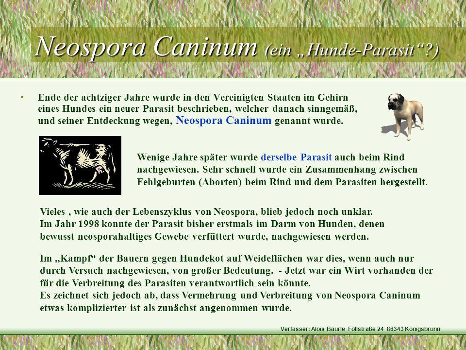 "Neospora Caninum (ein ""Hunde-Parasit )"