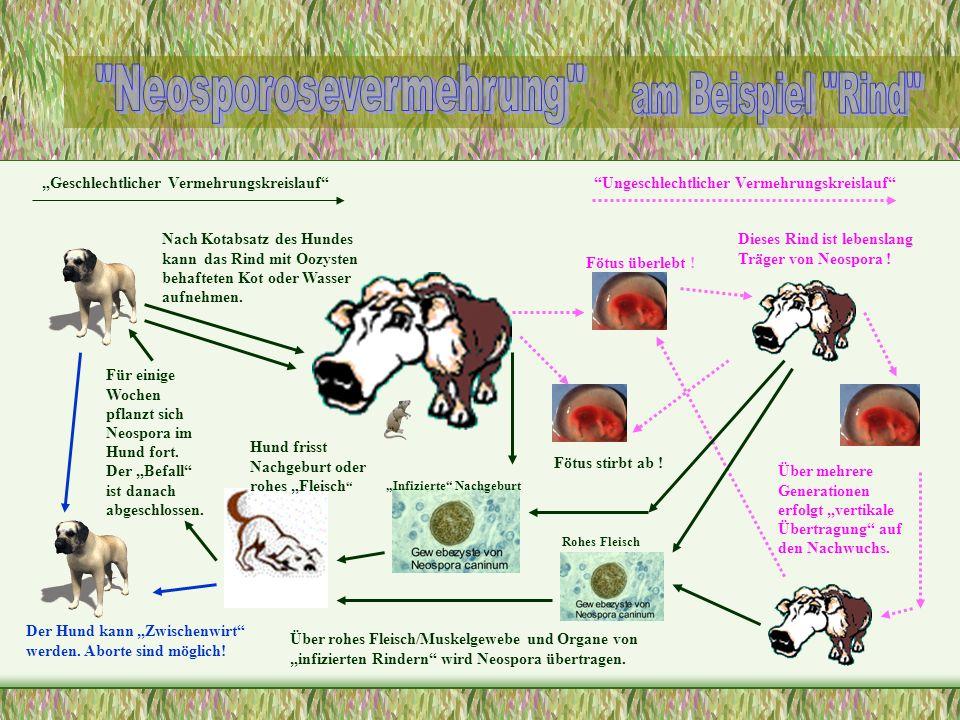 Neosporosevermehrung