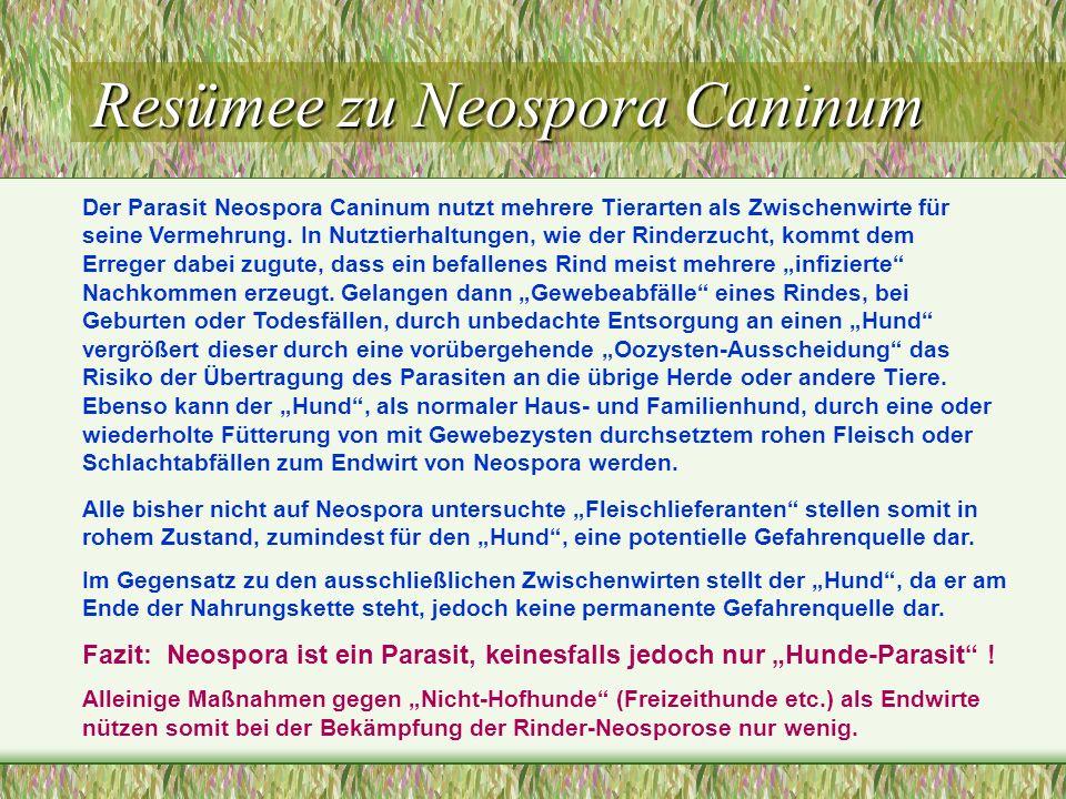 Resümee zu Neospora Caninum