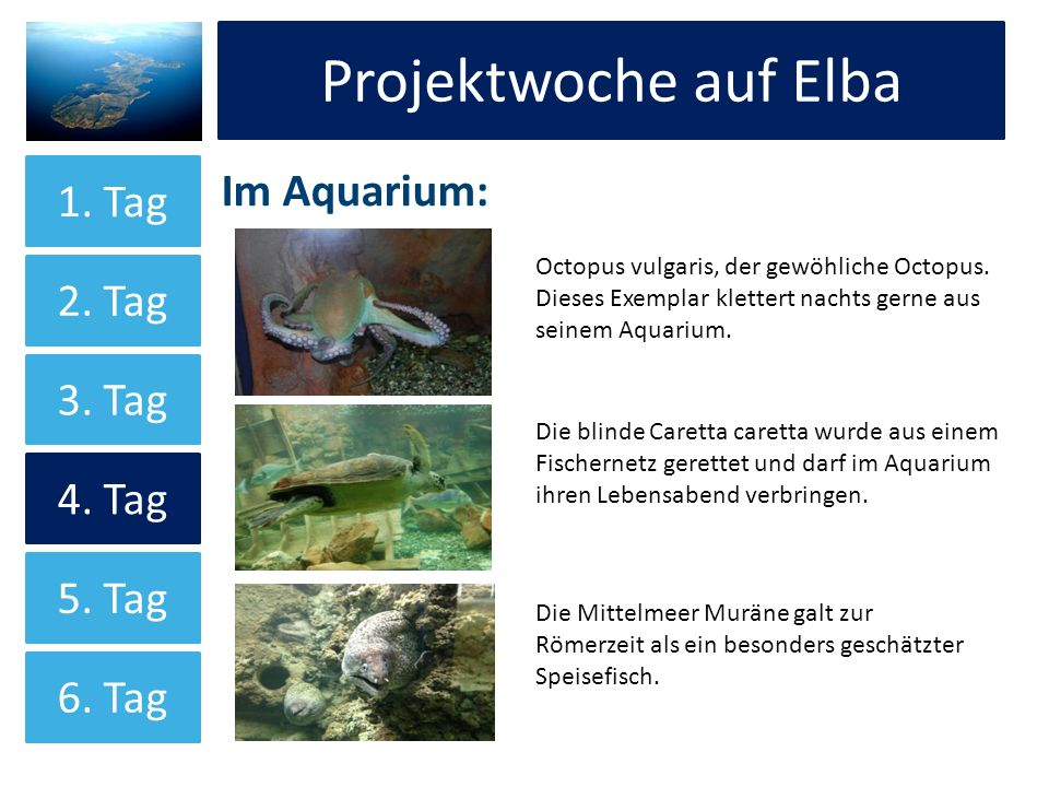 Projektwoche auf Elba Projektwoche auf Elba Im Aquarium: 1. Tag 2. Tag