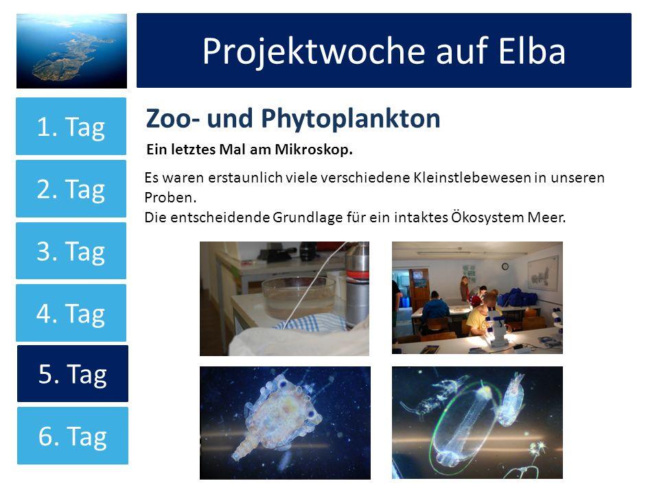 Projektwoche auf Elba Projektwoche auf Elba Zoo- und Phytoplankton