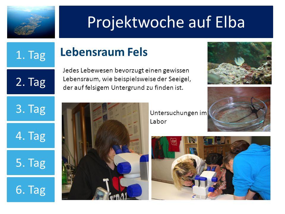 Projektwoche auf Elba Projektwoche auf Elba Lebensraum Fels 1. Tag