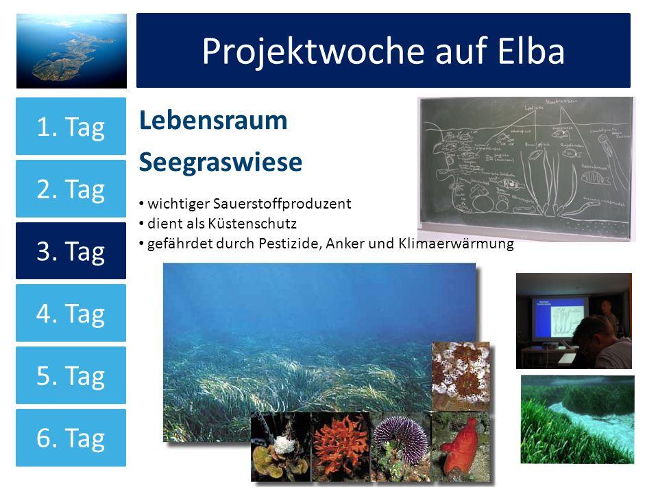 Projektwoche auf Elba Projektwoche auf Elba Lebensraum Seegraswiese
