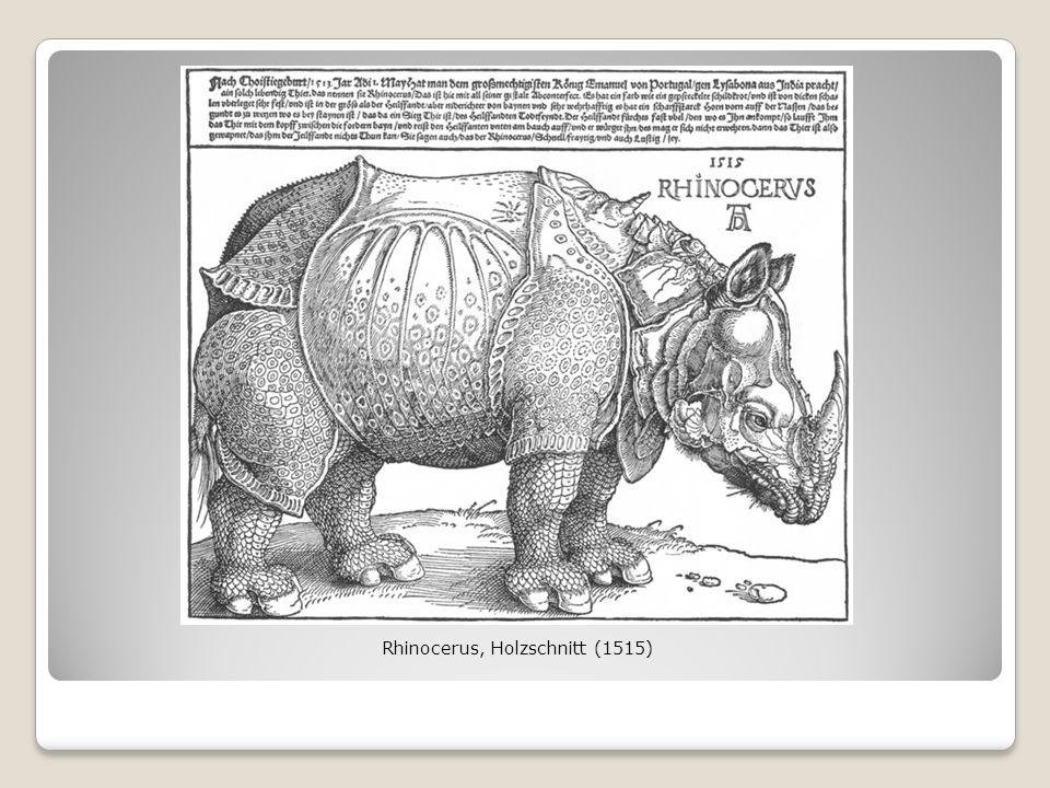 Rhinocerus, Holzschnitt (1515)