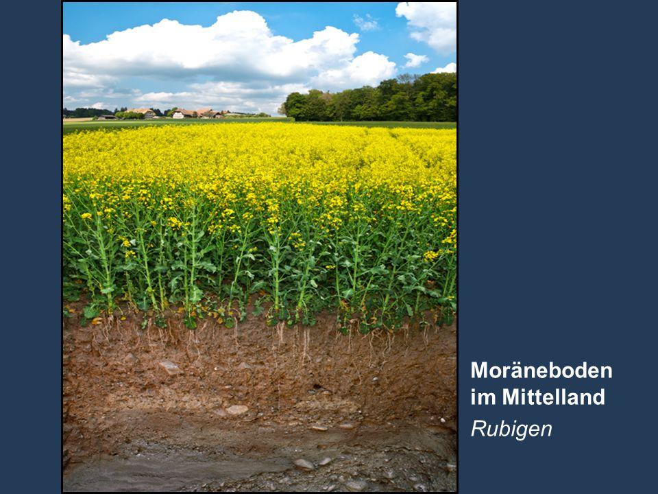 Moräneboden im Mittelland