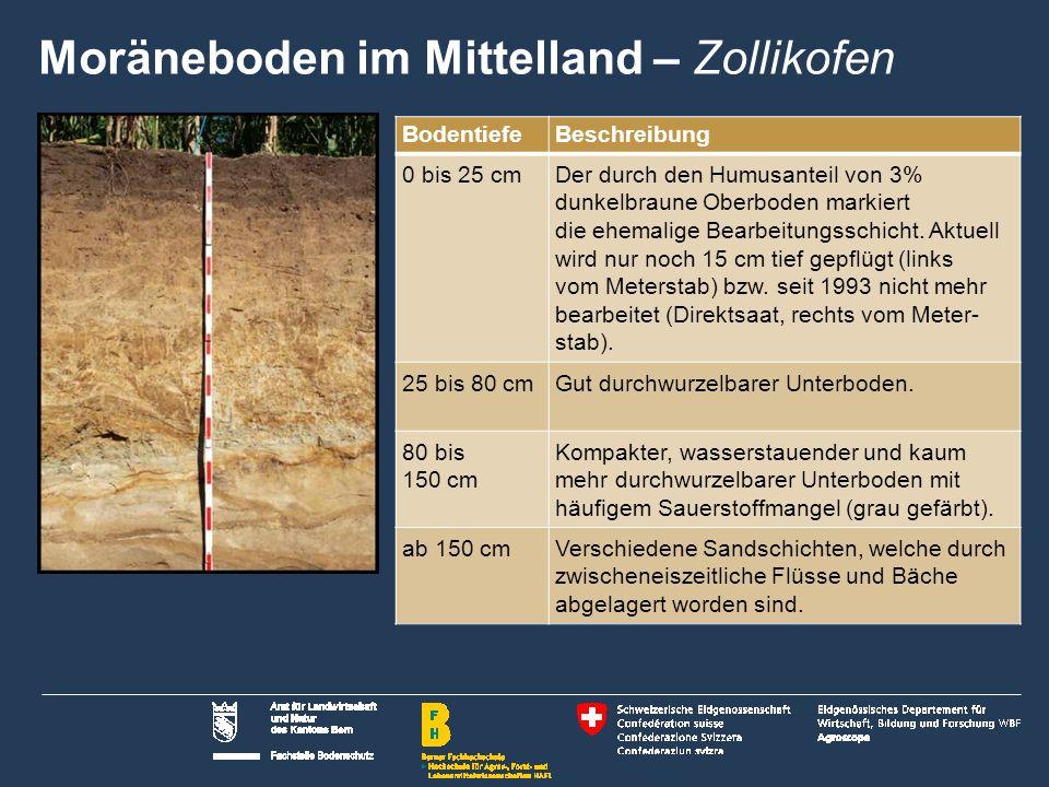 Moräneboden im Mittelland – Zollikofen