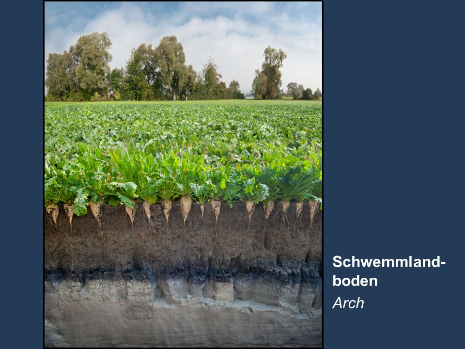 Schwemmland- boden Arch