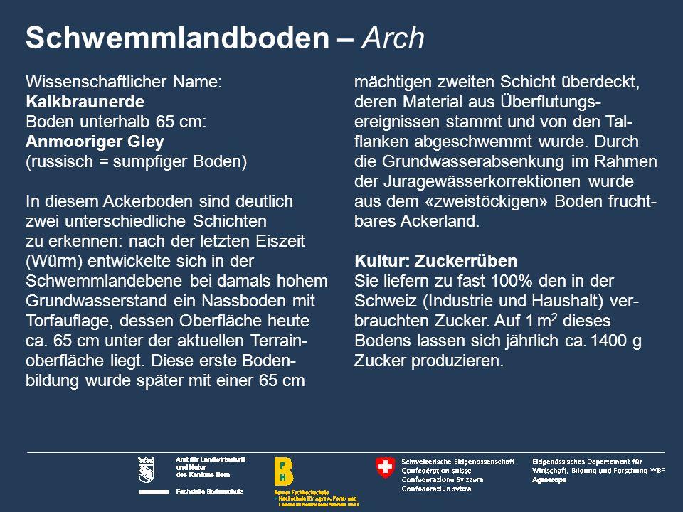 Schwemmlandboden – Arch