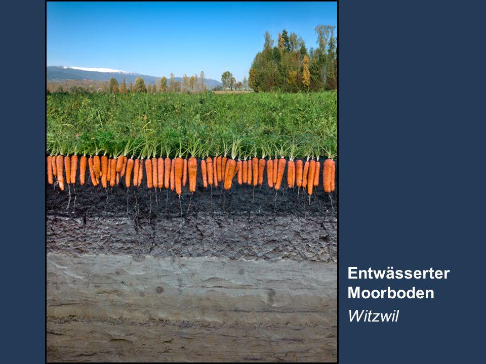 Entwässerter Moorboden