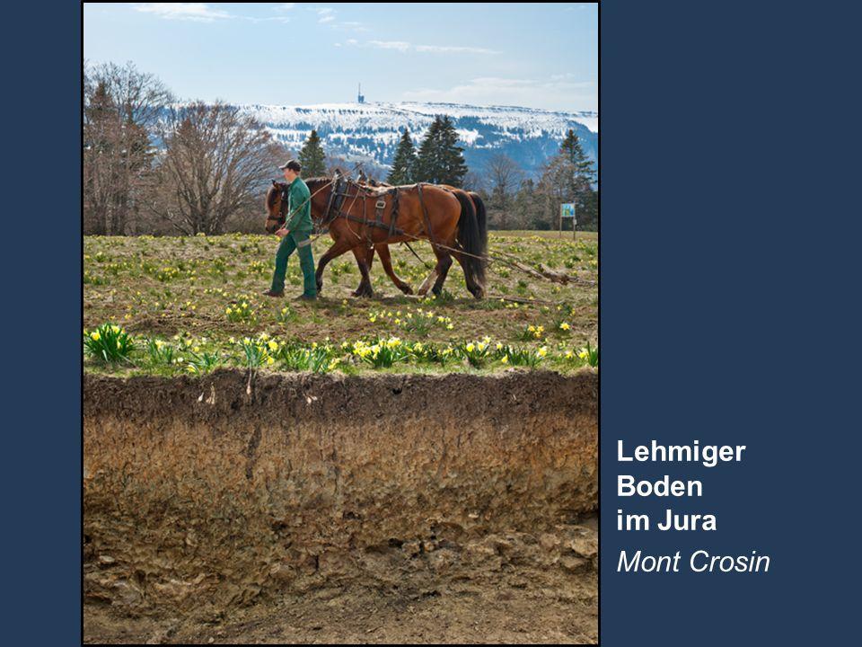 Lehmiger Boden im Jura Mont Crosin