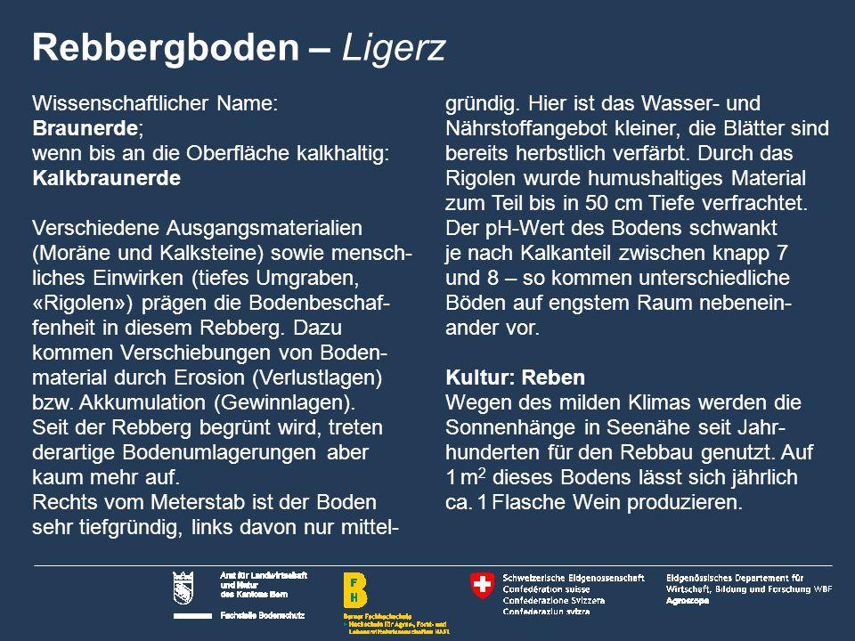 Rebbergboden – Ligerz Wissenschaftlicher Name: Braunerde; wenn bis an die Oberfläche kalkhaltig: Kalkbraunerde.